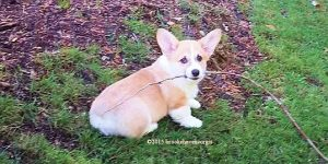 Branch Puppy